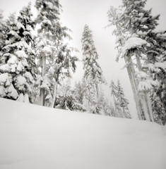 on this christmas eve (manyfires) Tags: trees winter blackandwhite bw snow film forest square landscape washington nationalpark pinhole pacificnorthwest mtrainier zero2000 zeroimage mtrainiernationalpark