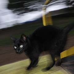 Diesel On The Roundabout (Chris Bloom) Tags: pet motion black blur cute playground cat long exposure slow diesel roundabout adorable