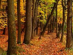 Autumn Forest, Washington Valley Park, NJ (YG Low) Tags: autumn nature forest canon landscape 50mm newjersey nj