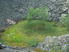 CIMG1551 (AmyFromTheCourt) Tags: arte natura case uccelli finestra fiori piante castello montagna macchina gabbiano alvaraalto renne finlandia babbonatale roccie circolopolareartico