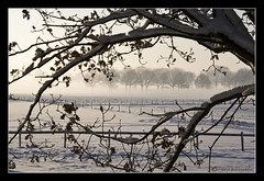 Framed (Marjo1963) Tags: winter mist snow cold tree fog sneeuw boom frame polder koud doorkijkje 122010
