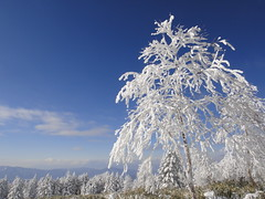 White Tree (peaceful-jp-scenery) Tags: winter snow japan landscape snowshoe snowshoeing     frostcoveredtrees