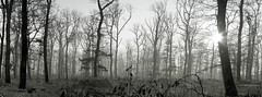 Forest in a haze (elkarrde) Tags: pentax k20d pentaxk20d smcpentaxfa50mmf14 fa5014 fa50 stitchedpanorama stitched panorama autopano xpan snow forest woods haze fog trees winter 2010 winter2010 blackwhite twop justpentax pentaxart digital mediumdigital