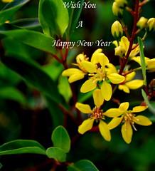 Happy New Year (Ratnakar2.) Tags: flowers green yellow happynewyear 2011
