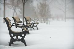 Bancs de brume / Foggy Benches (guysamsonphoto) Tags: winter snow hiver neige benches bancs nikkor70300vr nikond7000 guysamson