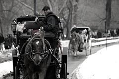 Hey, you want a ride ??  (Greetings from Central Park, NYC) (Hazboy) Tags: new york city nyc schnee winter blackandwhite bw horse usa snow apple weather america caballo cheval us big day carriage centralpark manhattan nieve sneeuw neve neige years lumi  bigapple cavallo pferd sn paard nieg elurra snjr nevar  l kon  2011 ko zapada h  hazboy hazboy1  snja nevicar