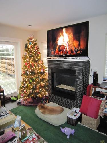 Dog, tree, Shaw fire log