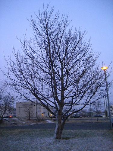 Tree (168)