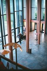 Glass entrance (IrvineShort) Tags: fuji theatre capetown pro electro baxter yashica rondebosch 800z jackbarnett lesbroers