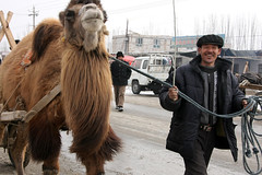 Smiling man walking with a camel, Monday bazaar, near Kashgar (aygulmipo) Tags: uyghur uighur xinjiang china chinese travel silkroad centralasia kashgar winter snow              photo  shule market bazaar monday     camel  street road people