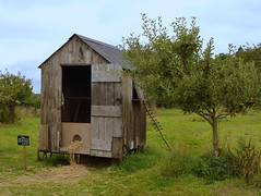 Poultry paradise (G P Cat) Tags: chicken field shropshire orchard nationaltrust appletrees chickenhouse attinghampark