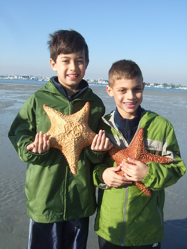 Ethan and AJ find starfish