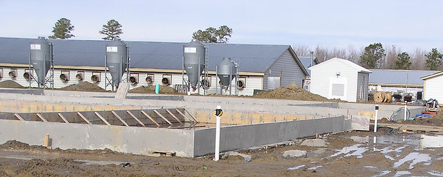 Construction at a Smithfield farm in Waverly, VA as part of an effort to convert gestation stalls to group housing