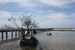 long island(januari 2011)