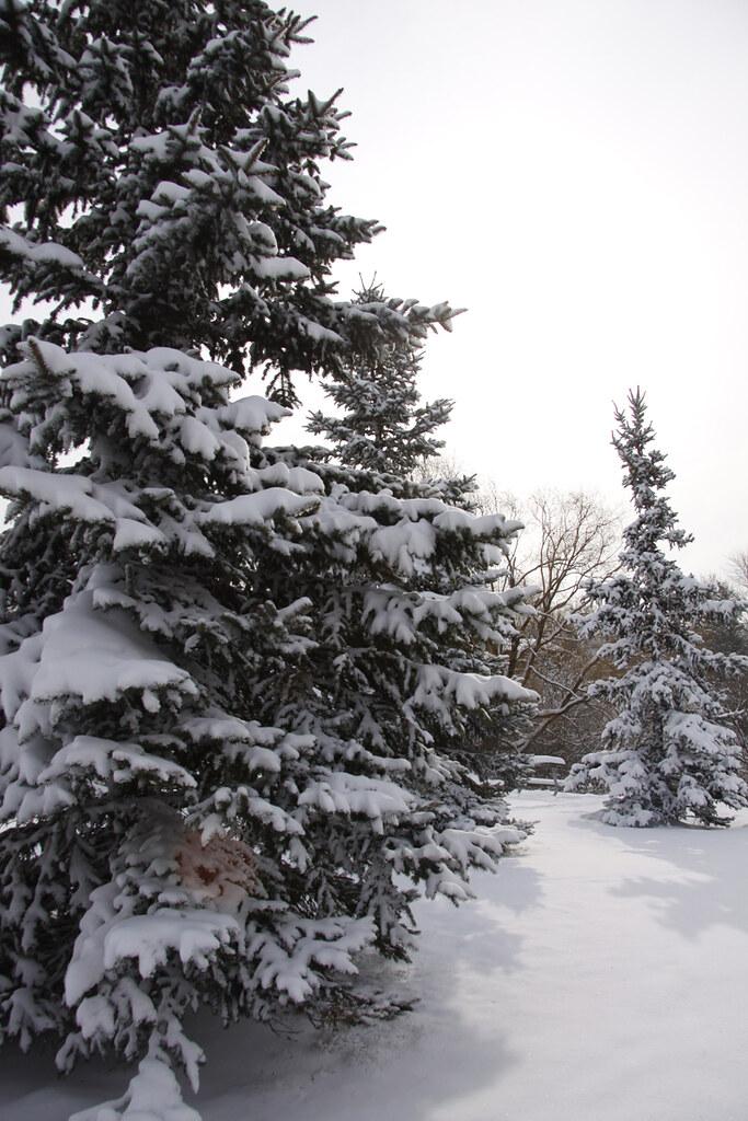 park pines3