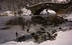 Invierno en Nueva York / Winter in New York  (8 / 365) (Carlos E. Gmez) Tags: park new york bridge winter lake snow newyork water photoshop lens centralpark manhattan sony central ducks sigma reflect 1020mm cs4 a350 photoshopcs4 sonyalphaa350 sigma1020mmexdcsuperwideanglelens