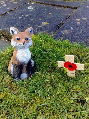 fox poppy