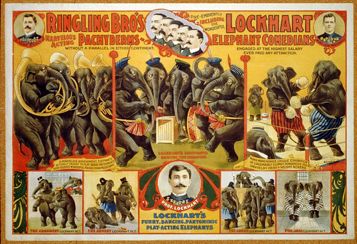 011-Ringling Bro's marvelous acting Pachyderms ... Lockhart elephant comedians ..1899-Library of Congress-