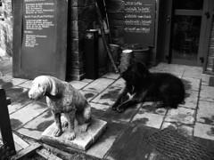 Uh & Uf (foncer) Tags: bw dog antiphoto andorra gos 2011 foncer