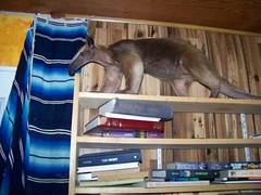 On top of the shelves