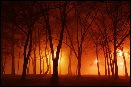 The Return of the Foggy Night.