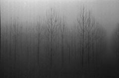(Emiliano Zanichelli) Tags: 35mm nebbia inverno kodaktmax400 50mmf14 xtol11 canonftbql poviglio
