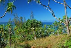 DSC_0161 (johnhane) Tags: temp park travel outdoors hawaii january delete hike trail kauai kalalau napali napalicoast 2011 kalalautrail haenastatepark