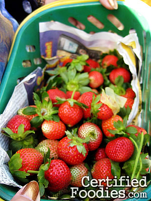 Strawberries my mother and I picked at Strawberr Farm in Baguio - CertifiedFoodies.com