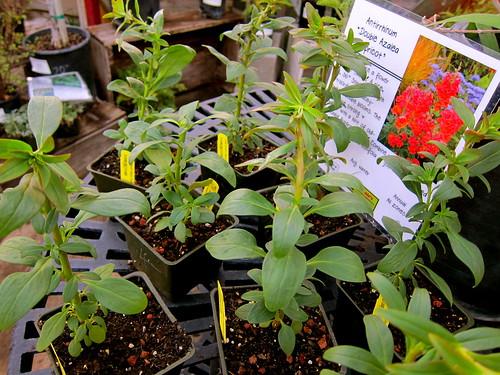 New plants!