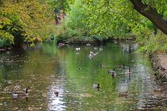 D15609.  Lloyd Park. (Ron Fisher) Tags: water lake pond lloydpark walthamstow e17 london londone17 trees green path pentax pentaxkx tamron tamron18200mm tamronaf18200mmf3563xrdiiildasphericalif park reflections