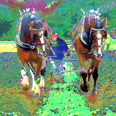 Time to plough (Lemon~art) Tags: painterly horses plough man old memory animals timegoneby field farm oldfashioned nature outside art thewaywewere nostalgia