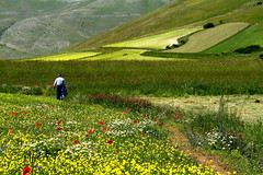 A walk among the flowers (annalisabianchetti) Tags: walking flowers colors light fields nature paesaggio landscapes castellucciodinorcia umbria