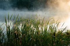 132231-011 (Paul Henegan) Tags: kodakultramax400 olympusltzoom105 lake mist earlymorninglight goldenhour lakebuel