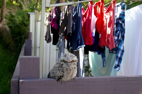 a little visitor watches over the clothesline