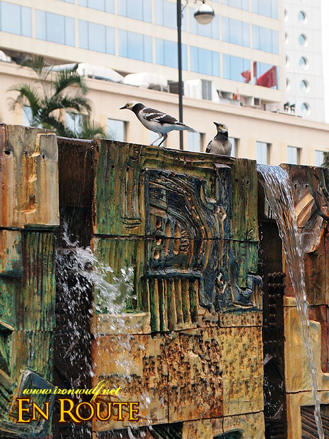 Many City Bird enjoys the water fountain for their bird bath