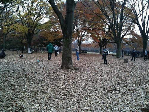 代々木公園のドックランなう。平日なのに結構人がいますね。