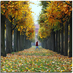 Autumn walk (Nespyxel) Tags: november autumn trees man berlin leaves foglie alberi walking novembre alone pov perspective autunno prospettiva berlino charlotteburg nespyxel stefanoscarselli saariysqualitypictures prospettivanespy