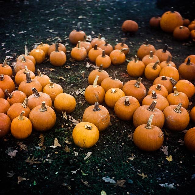 Pumpkins in Pelham
