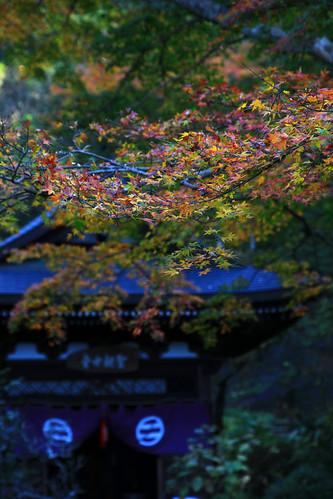 円覚寺 2010年12月4日