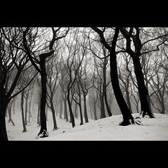 Can't See the Wood for the ... (Mr sAg) Tags: park trees winter blackandwhite bw snow forest countryside interestingness interesting woods explore oldham sag countrypark simonharrison explored royton tandlehills mrsag