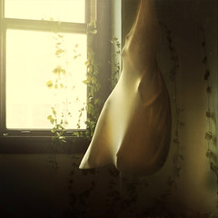 hung to dry (brookeshaden) Tags: sunlight green window flesh vines room sac workshop hanging cloth brookeshaden texturebylesbrumes