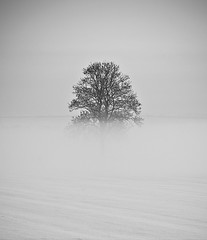 Morning Mist (Gordon Mould) Tags: uk winter bw mist snow cold tree ice lens geotagged nikon flickr frost leicestershire loughborough lightroom 18105 d90 18105mm superaplus aplusphoto nikond90