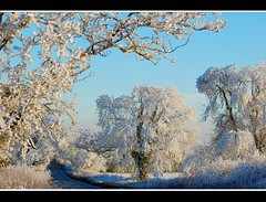 Jack Frost..... (Levels Nature) Tags: uk trees england white cold tree nature bravo frost freezing somerset frosty mendip mendips cranmore topshots mendiphills natureselegantshots flickrsportal
