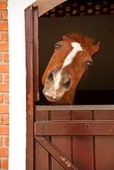 Haras Lagoinha (Rita Domiciano) Tags: brazil horses color brasil digital sopaulo cavalos stable cor studfarm haras jacare cocheira mangalarga haraslagoinha