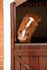 Haras Lagoinha (Rita Domiciano) Tags: brazil horses color brasil digital sãopaulo cavalos stable cor studfarm haras jacareí cocheira mangalarga haraslagoinha