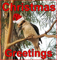 eCard- Christmas Greetings - kookaburra