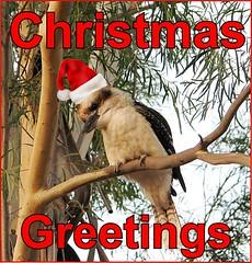 eCard- Christmas Greetings - kookaburra