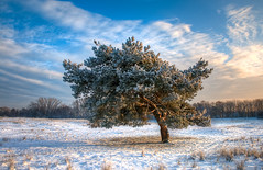 Close to you... (George Goodnight) Tags: blue winter sky cloud white snow tree germany landscape nikon mainz hdr johnbutlertrio closetoyou nikond300 georgegoodnightphotography