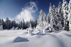 I am from Austria (gregor H) Tags: schnee winter geotagged austria dornbirn sterreich naturereserve moor whitesnow thick schwarzenberg freshsnow aut natur