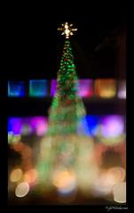 Christmas Tree Free Lensing (madmarv00) Tags: lights hawaii nikon christmastree christmaslights honolulu tiltshift honoluluhale d7000 madmarv freelensing kylenishiokacom 365phototweeps